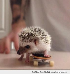 cute-animal-skateboard-baby-hedgehog-table-pics