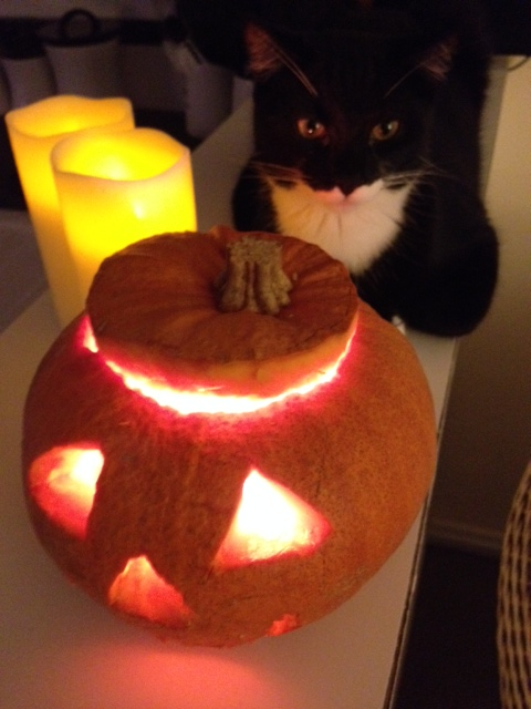He then agreed to pose with the pumpkin and candles to create a pumpkin display. He's still there. (just kidding!)
