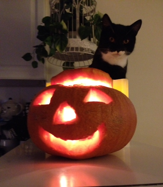 Harry decided to help out and give me a scary pose to compensate for the too-happy pumpkin.
