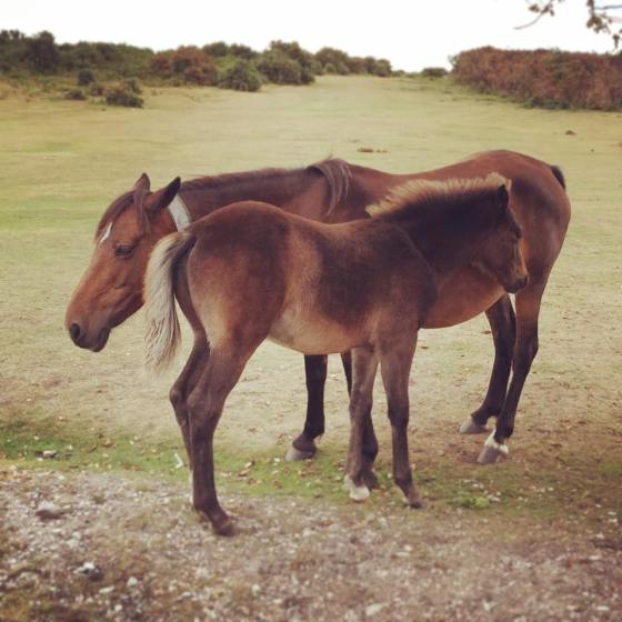 New Forest ponies roam freely around the parkland and villages